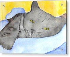 Minou Acrylic Print by Djl Leclerc