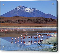 Acrylic Print featuring the photograph Mirage by Skip Hunt