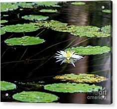 Mirror Lily Acrylic Print