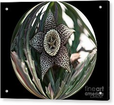 Captured Five-point Star Succulent Acrylic Print