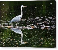 Mirrored Heron Acrylic Print