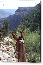 Acrylic Print featuring the photograph Miss Ann  by Nancy Taylor
