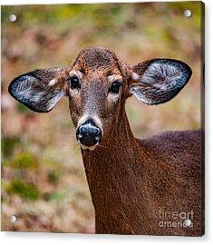Miss Deer 1 Acrylic Print