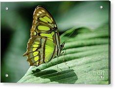 Miss Green Acrylic Print by Nick Boren