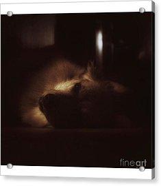 Miss Hannah. #dogs #petstagram #gsd Acrylic Print