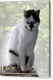 Acrylic Print featuring the photograph Miss Jerrie Cat With Watercolor Effect by Rose Santuci-Sofranko