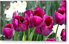 Miss Tulip Acrylic Print by Lanjee Chee