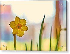 Miss Yellow Acrylic Print
