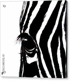 Miss Zebbie Acrylic Print