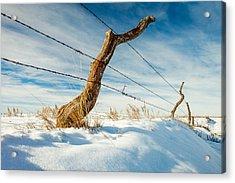 Misshapen Acrylic Print by Todd Klassy