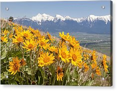 Mission Mountain Balsam Blooms Acrylic Print by Jack Bell