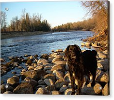 Acrylic Print featuring the photograph Mississippi River Good Morning by Kent Lorentzen