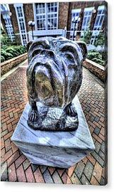 Mississippi State Bulldog Acrylic Print