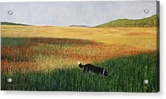 Missy In The Field Acrylic Print by Allan OMarra
