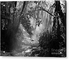Mist In The Jungle Acrylic Print