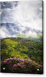 Rhododendrons - Roan Mountain Acrylic Print