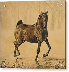 Acrylic Print featuring the drawing Mistical Horse by Melita Safran