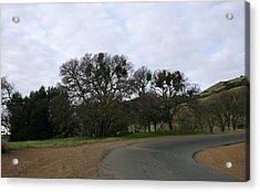 Mistletoe Oaks Acrylic Print by Michael Courtney