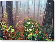 Misty Autumn Woodland Acrylic Print by Thomas R Fletcher