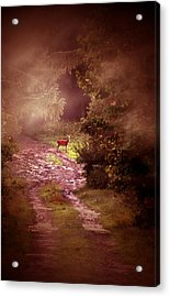 Misty Deer Acrylic Print by Emily Stauring