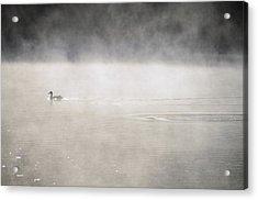 Misty Duck Acrylic Print