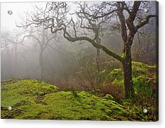 Misty Forest Acrylic Print by Keith Boone