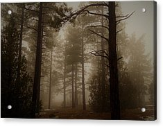 Misty Forest Morning Acrylic Print
