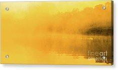 Misty Gold Acrylic Print
