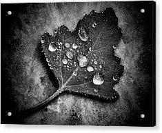 Misty  Acrylic Print by Karen Scovill