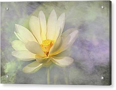 Acrylic Print featuring the photograph Misty Lotus by Carolyn Dalessandro