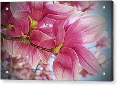 Misty Magnolia Acrylic Print