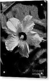 Misty Acrylic Print by Marsha Heiken
