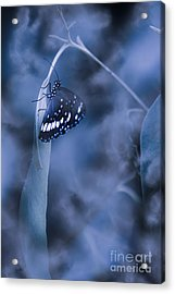 Misty Moonlight Butterfly In Blue Twilight Forest Acrylic Print by Jorgo Photography - Wall Art Gallery