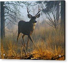 Misty Morning Buck Acrylic Print by Ben Upham III