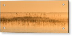Acrylic Print featuring the photograph Misty Morning Floating Bog Island On Boy Lake by Patti Deters
