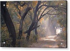 Misty Morning, Bharatpur, 2005 Acrylic Print