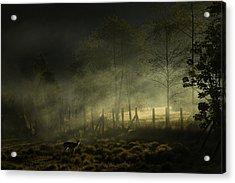 Misty Morning Acrylic Print by Nunu Rizani