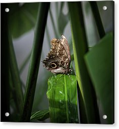Acrylic Print featuring the photograph Misty Morning Owl by Karen Wiles