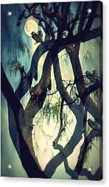 Misty Morning-sold Acrylic Print