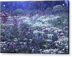 Misty Morning Wildflowers 3 Acrylic Print