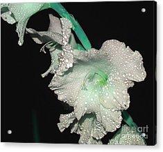 Misty Petals Acrylic Print by Debbie May