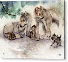 Misty Pines Wolf Family Acrylic Print by Tracy Herrmann