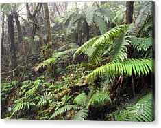 Misty Rainforest El Yunque Acrylic Print by Thomas R Fletcher