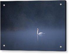 Misty River Swan Acrylic Print