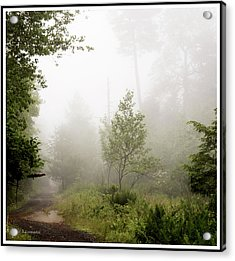 Misty Road At Forest Edge, Pocono Mountains, Pennsylvania Acrylic Print