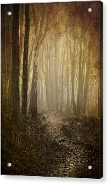 Misty Woodland Path Acrylic Print by Meirion Matthias