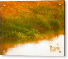 Misty Yellow Hue -lone Jacana Acrylic Print