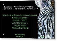 Mito Awareness Zebra Acrylic Print