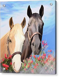 Miwok Horses Acrylic Print