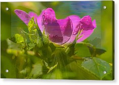 Acrylic Print featuring the photograph mix by Leif Sohlman